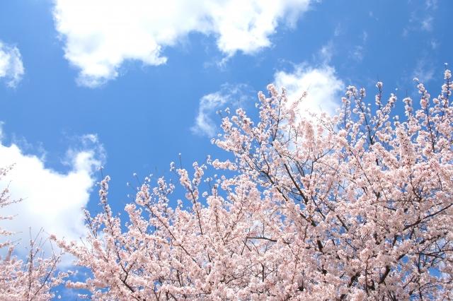 """アルガンオイルで""""春のゆらぎ肌""""対策"""